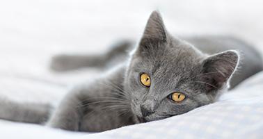 chat stérilisation