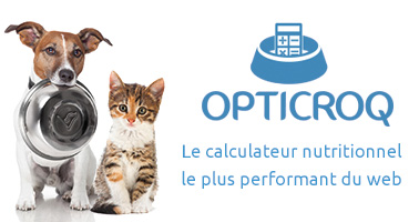 image_titre_article_opticroq_chien_chat