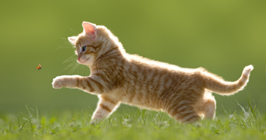 Les vers chez les chats