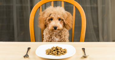 chien : quelle alimentation ?