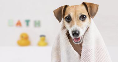 le-bon-rythme-pour-les-soins-dhygiene-de-mon-chien