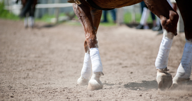 comment-soulager-un-cheval-arthrosique