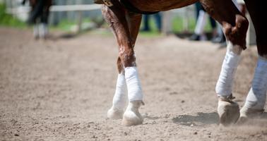 comment-soulager-un-cheval-arthrosique