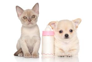 les-laits-maternises-pour-chiots-et-chatons