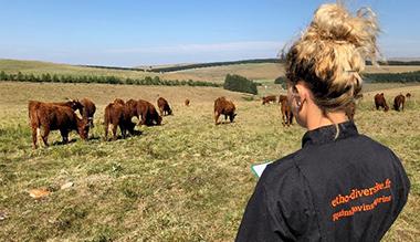 les-benefices-de-lenrichissement-de-lenvironnement-du-bovin