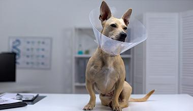 les-10-bonnes-raisons-de-faire-steriliser-mon-chien